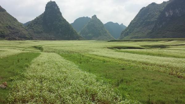 南宁市种子管理站检查隆安荞麦项目建设情况