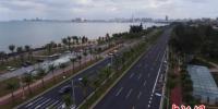 """海口街头补种近万株椰子树增加""""椰城""""特色 - 广西新闻网"""