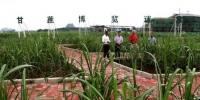 """中国新闻网:中国加速蔗糖机械化发展 激活糖业""""二次创业"""" - 农业机械化信息"""