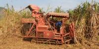 凭祥市甘蔗机械化收获实现零突破 - 农业机械化信息